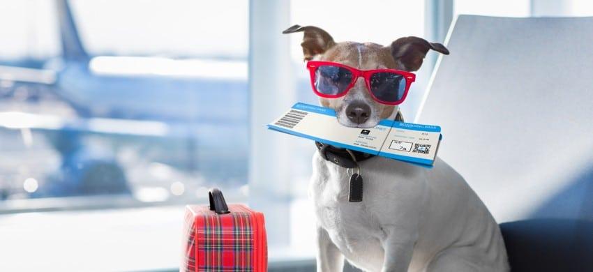 Viaggiare in aereo con un cane